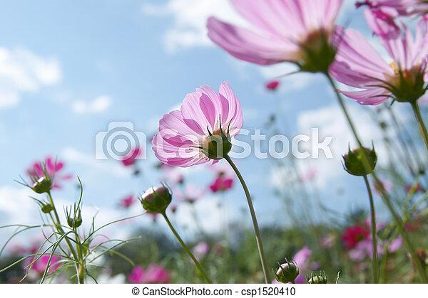 wildflower - csp1520410