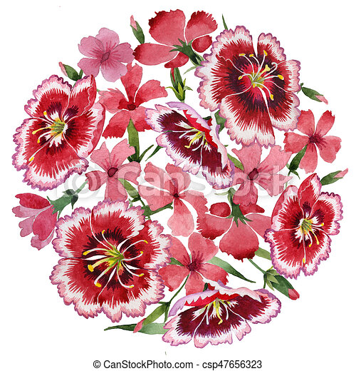 wildflower carnation flower in a watercolor style isolated clip rh canstockphoto com carnation clip art free carnation image clipart
