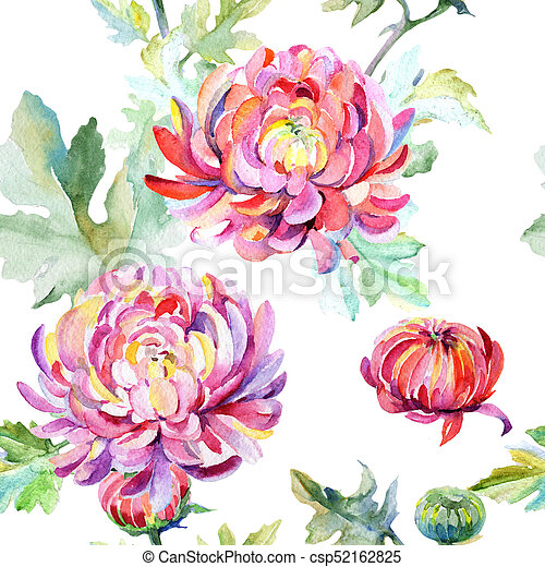 Wildflower chrysanthemum flower pattern in a watercolor style. - csp52162825