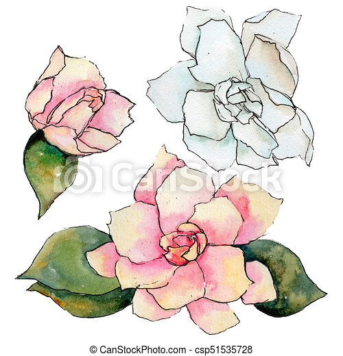 Wildflower Gardenia Flower In A Watercolor Style Isolated Clip