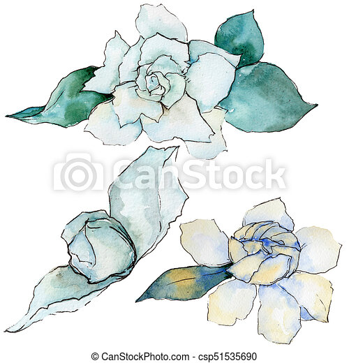 Wildflower Gardenia Flower In A Watercolor Style Isolated Full Name