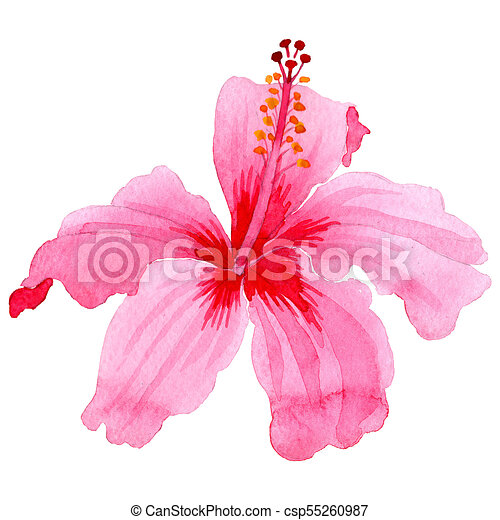 Wildflower Hibiscus Pink Flower In A Watercolor Style Isolated Full