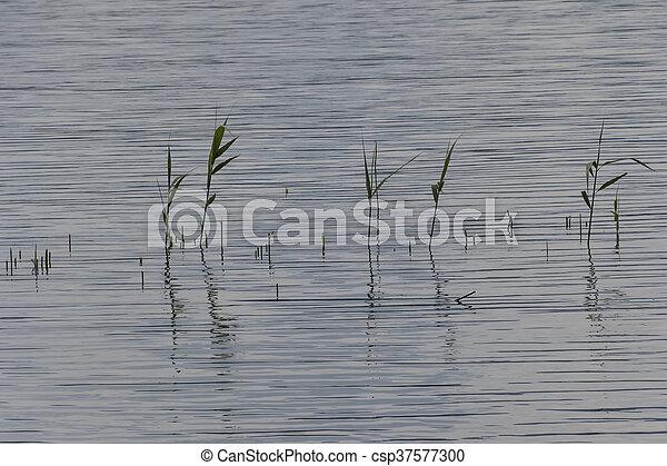 wildflower on lake - csp37577300