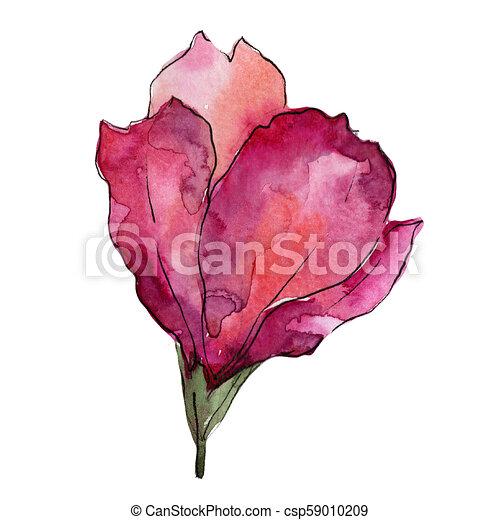 59b7df007 Wildflower pink alstroemeria. Floral botanical flower. Isolated  illustration element. - csp59010209