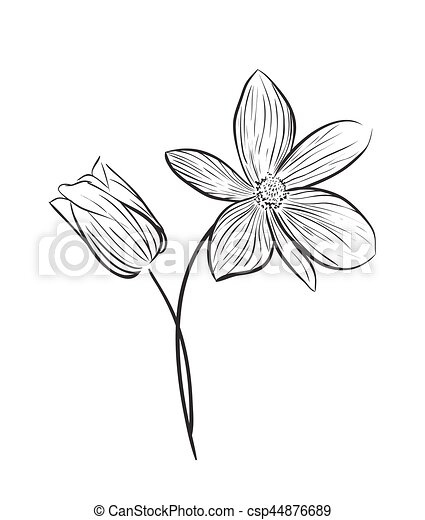 Wildflower-Vektor-Icon - csp44876689