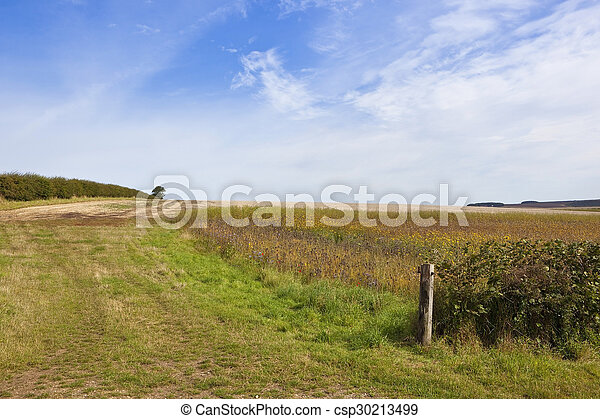 wildflowers and hawthorn hedgerow - csp30213499