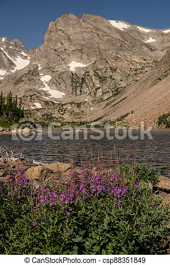 Wildflowers Bloom Along the Shore of Lake Isabelle - csp88351849