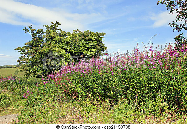 Wildflowers in a Hedgerow England - csp21153708