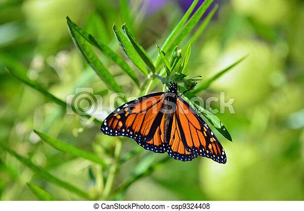 Wildlife and Animals - Butterflies - csp9324408