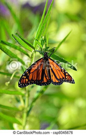 Wildlife and Animals -Butterflies - csp9345676