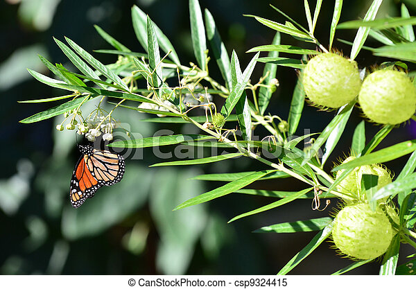 Wildlife and Animals - Butterflies - csp9324415