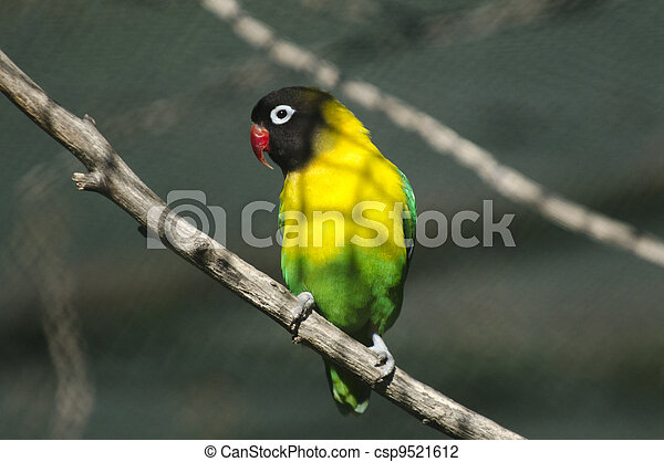 Wildlife and Animals - Exotic Bird  - csp9521612