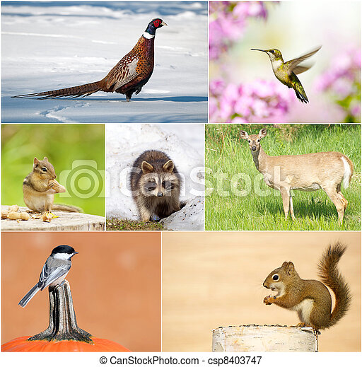 Wildlife collage. - csp8403747