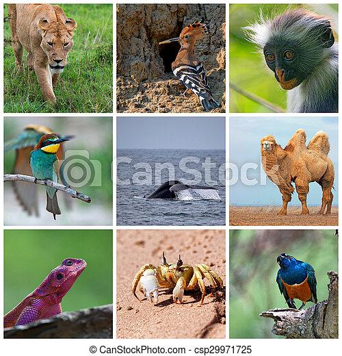 Wildlife Collage Consisting Ofl Images Of Wild Animals