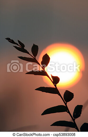 Willow branch against the evening sun. South Africa - csp53893008