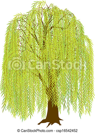 willow tree vector illustration of a weeping willow tree leaves rh canstockphoto com primitive willow tree clip art willow tree silhouette clip art