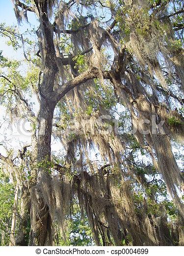 Willow Tree - csp0004699