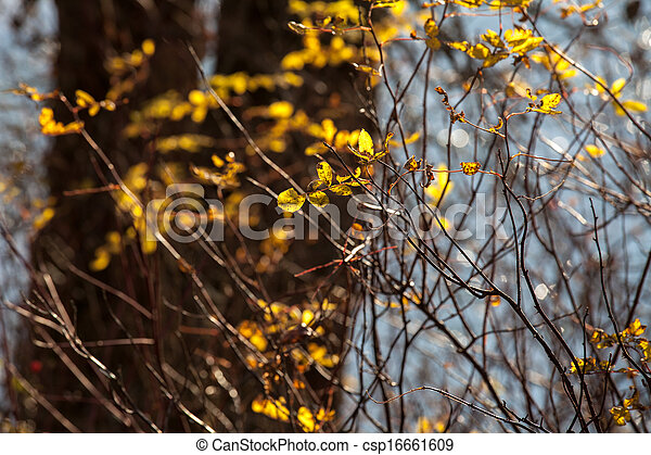 Willows in fall - csp16661609