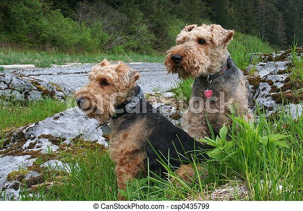 Wilson and Annie - csp0435799