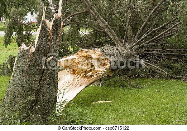 wind storm damage - csp6715122
