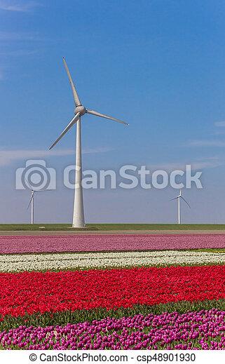 Wind turbine and a field of colorful tulips in Noordoostpolder - csp48901930