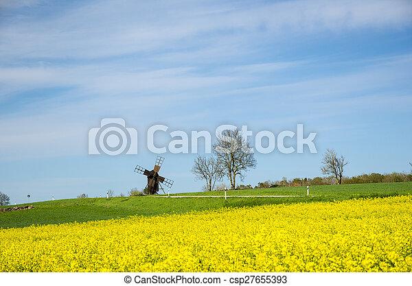 windmühle, blüte, altes , rapeseed, feld - csp27655393