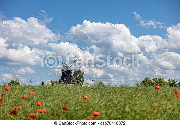 Eine alte Windmühle steht auf einem Canolafeld vor einem blauen Himmel mit weißen Wolken - csp70418872
