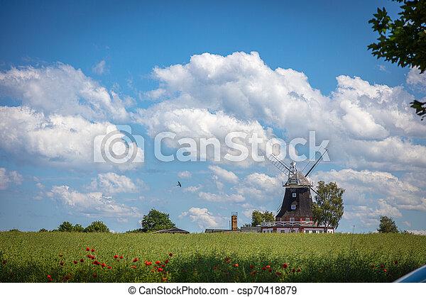 windmühle, blaues, altes , steht, canola, himmelsfeld, front, wolkenhimmel, weißes - csp70418879