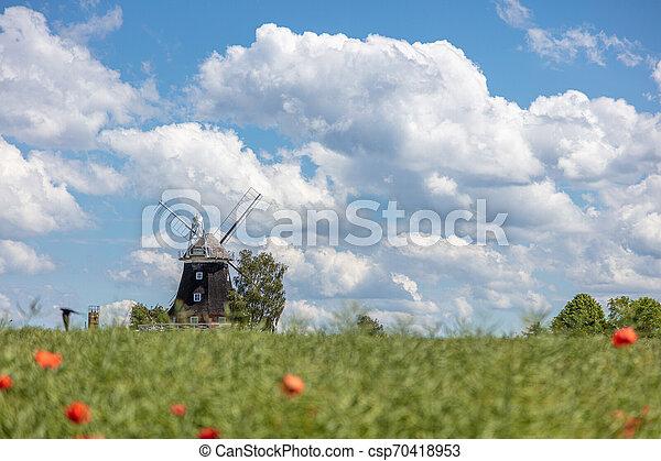 windmühle, blaues, altes , steht, canola, himmelsfeld, front, wolkenhimmel, weißes - csp70418953