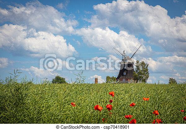 windmühle, blaues, altes , steht, canola, himmelsfeld, front, wolkenhimmel, weißes - csp70418901