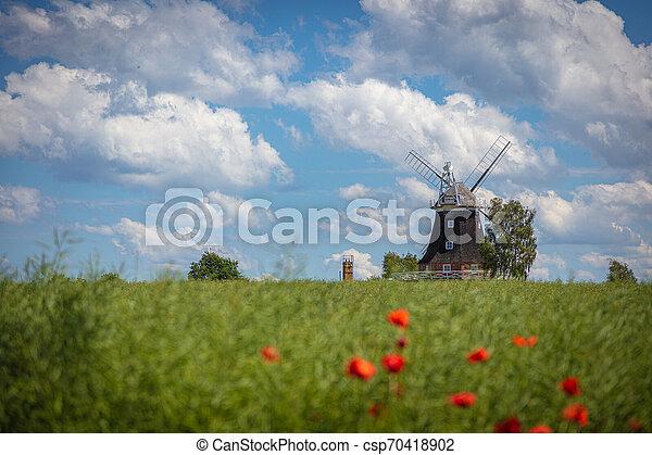 Eine alte Windmühle steht auf einem Canolafeld vor einem blauen Himmel mit weißen Wolken - csp70418902