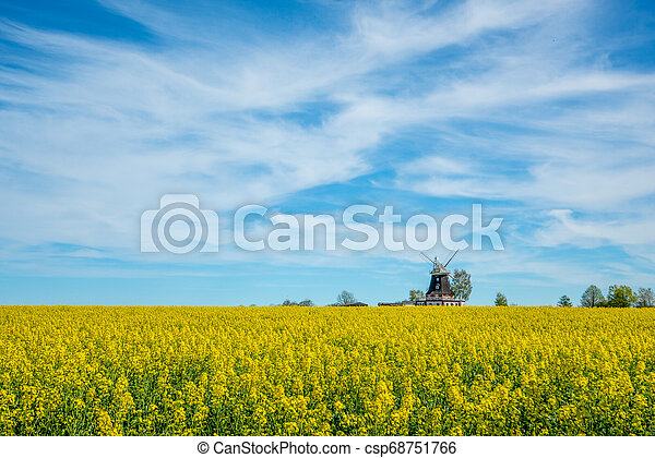 windmühle, feld, altes , steht, canola - csp68751766