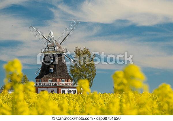 windmühle, feld, altes , steht, canola - csp68751620
