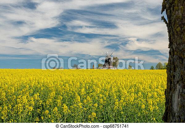 windmühle, feld, altes , steht, canola - csp68751741