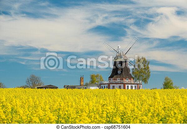 windmühle, feld, altes , steht, canola - csp68751604