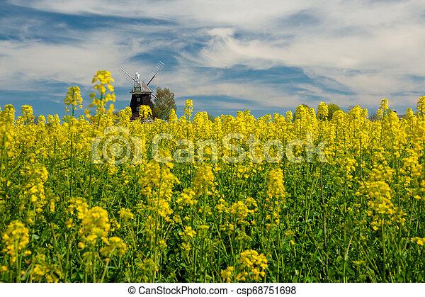 windmühle, feld, altes , steht, canola - csp68751698