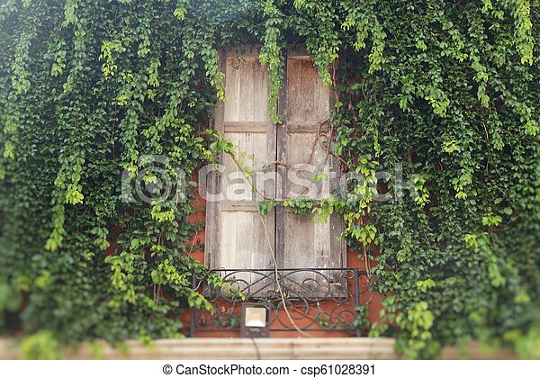 Window and brick wall with ivy tree - csp61028391