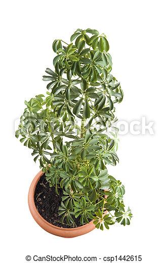 Window plant window plant csp1442615 mightylinksfo