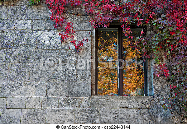 window - csp22443144