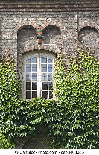 Window with ivy - csp8408085