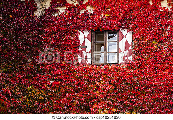 Windows of a house at autumn - csp10251830