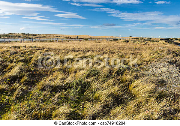 Windy grassy pampas in Chile - csp74918204
