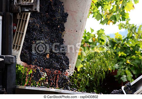 Wine making  - csp0430802