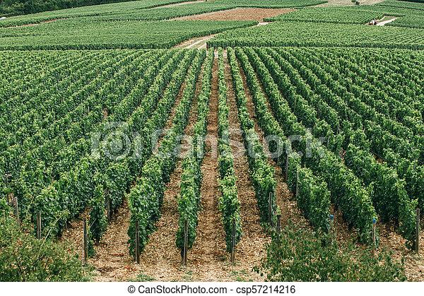 Wine region in france - csp57214216