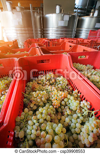 winemaking, ブドウ - csp39908553