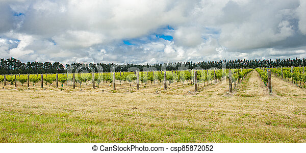 Winery of New Zealand - csp85872052