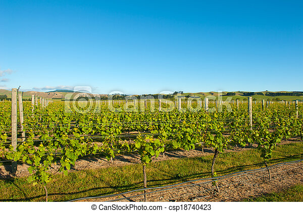 Winery of New Zealand - csp18740423