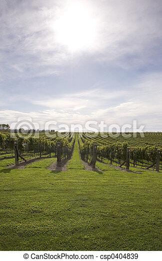 Winery - csp0404839