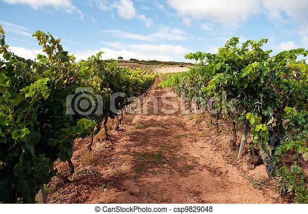Wineyard in la rioja, spain - csp9829048