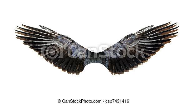 wings - csp7431416